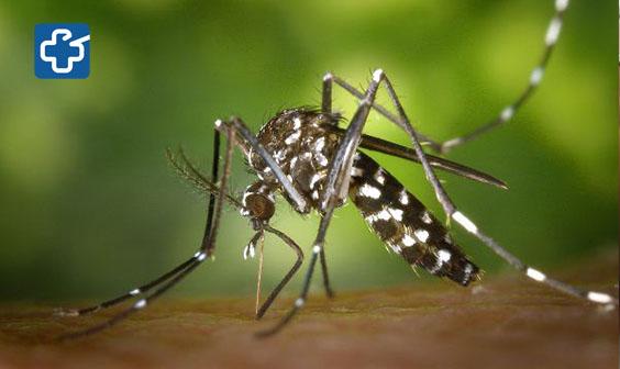 5 câu hỏi thường gặp về virus Zika gây teo não